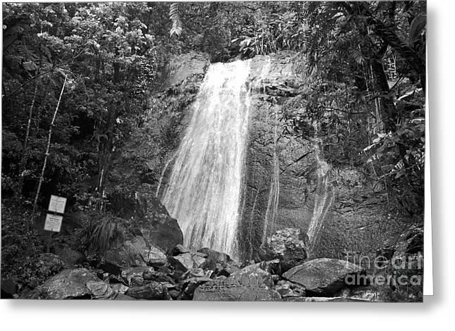 La Coca Falls El Yunque National Rainforest Puerto Rico Print Black And White Greeting Card by Shawn O'Brien