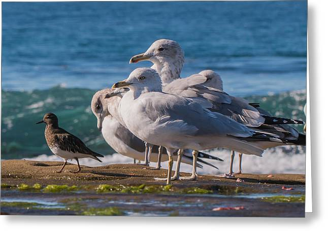 La Jolla Birds Greeting Card