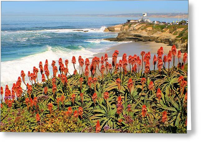 La Jolla Coast With Flowers Blooming Greeting Card
