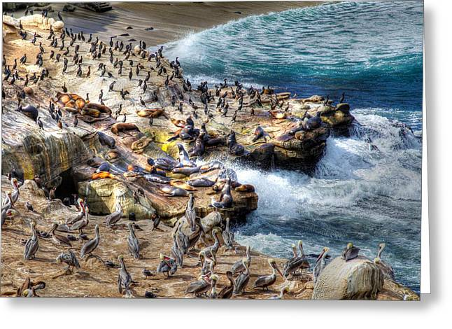La Jolla Cove Wildlife Greeting Card