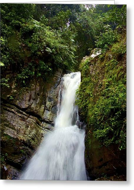 La Mina At El Yunque Greeting Card