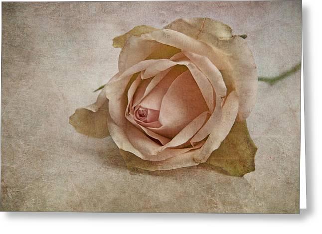 la vie en rose II Greeting Card by Claudia Moeckel