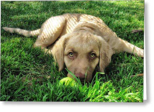 Labrador Puppy Greeting Card by Larry Marshall