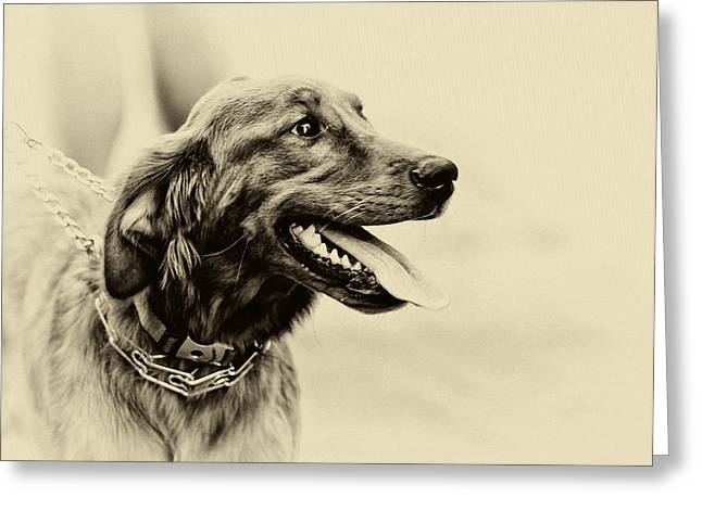 Labrador Retriever Greeting Card by Jerome Lynch