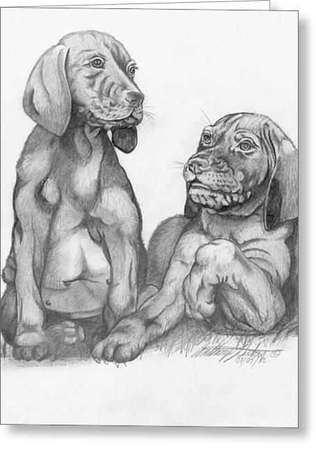 Labrador Retriver Puppies Greeting Card