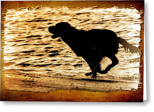 Greeting Card featuring the photograph Labrador Silhouette by Eleanor Abramson