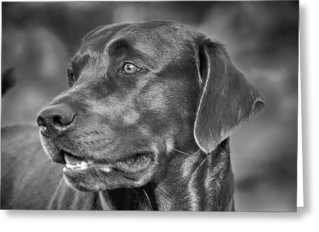 Labrador Sweetie Greeting Card