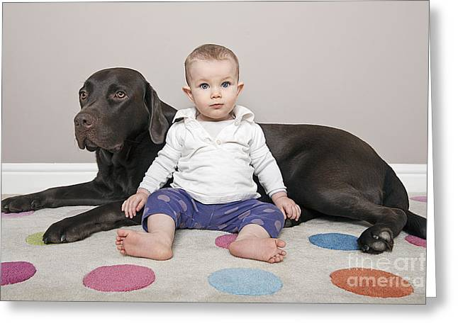 Labrador With Baby Girl Greeting Card by Justin Paget