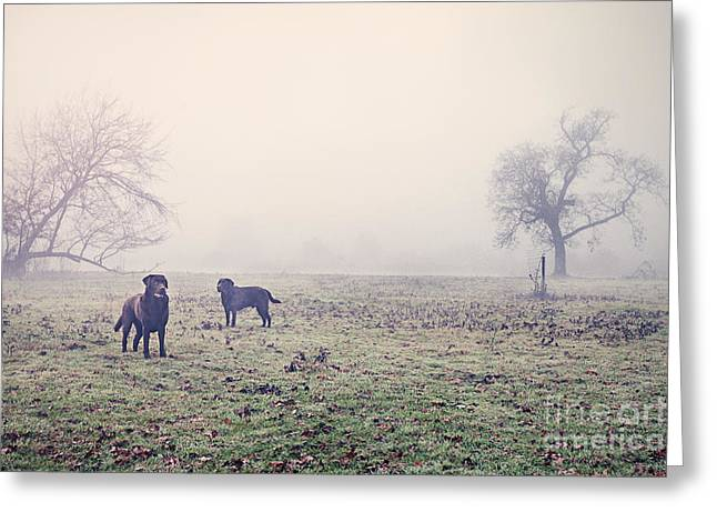 Labradors In Misty Field Greeting Card by Justin Paget
