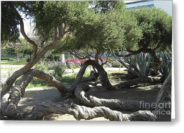 Labrea Tar Pit Trees Greeting Card by Deborah Smolinske