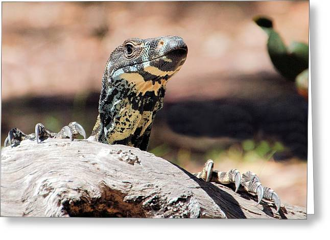 Lace Monitor Greeting Card
