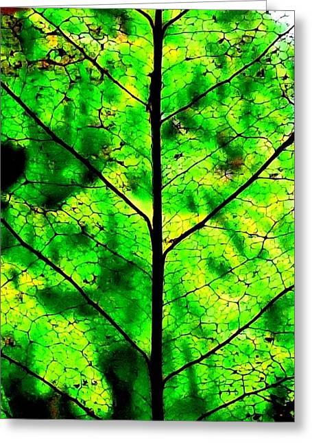 Lacey Leaf Greeting Card