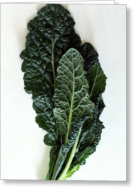 Lacinato Kale Greeting Card by Romulo Yanes