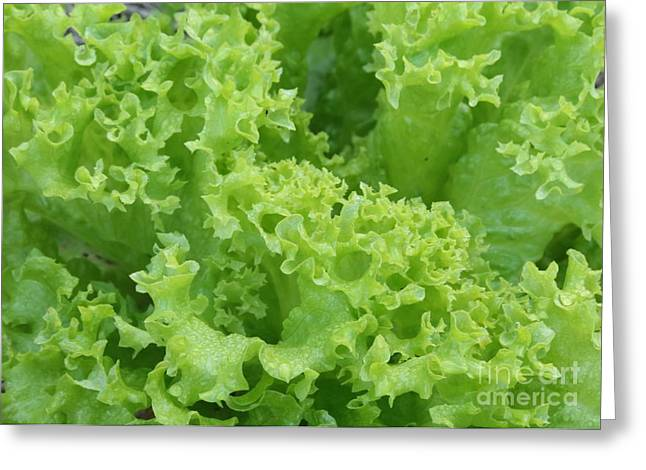 Lacy Lettuce Greeting Card by Carol Groenen