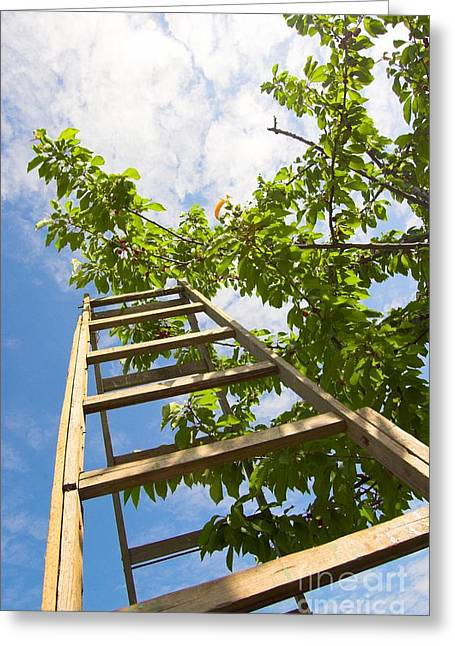 Ladder And A Tree Greeting Card by Michal Bednarek