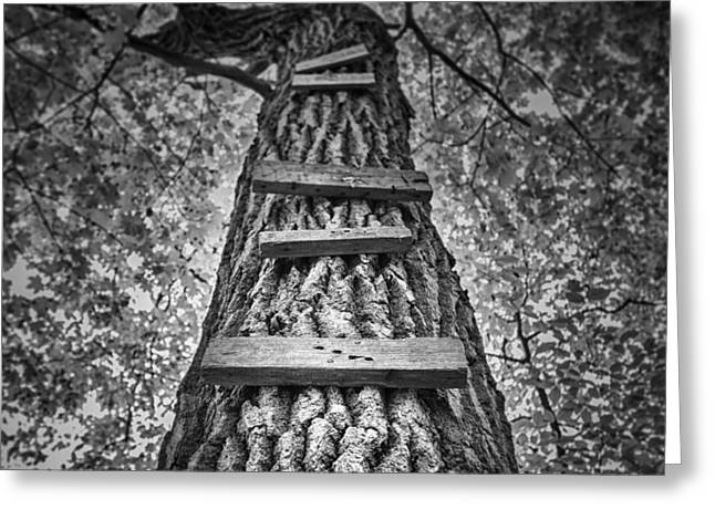 Ladder To The Treehouse Greeting Card by Scott Norris