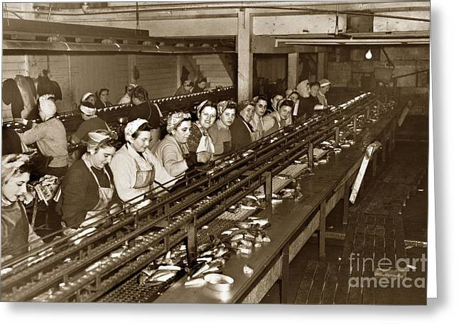 Ladies Packing Sardines In One Pound Oval Cans In One Of The Over 20 Cannery's Circa 1948 Greeting Card