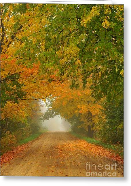 Low Autumn Tunnel Greeting Card by Terri Gostola