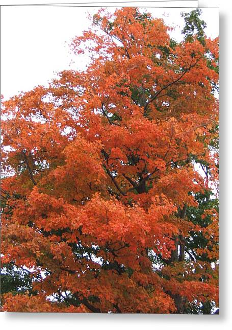 Lady Autumn - Tree Greeting Card by Margaret McDermott