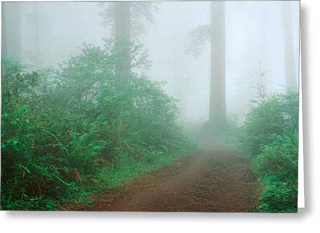 Lady Bird Johnson Grove, California Greeting Card by Panoramic Images