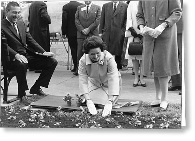 Lady Bird Johnson Planting Greeting Card by Underwood Archives
