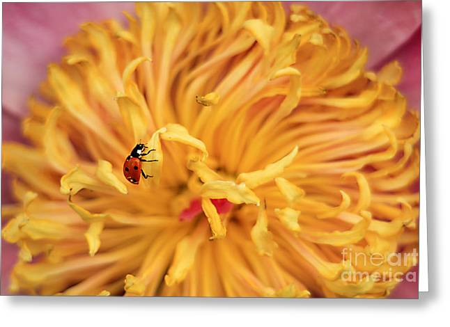 Lady Bug Greeting Card by Darren Fisher