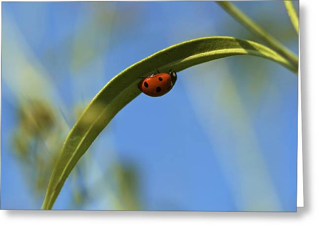 Lady Bug Lady Bug Greeting Card