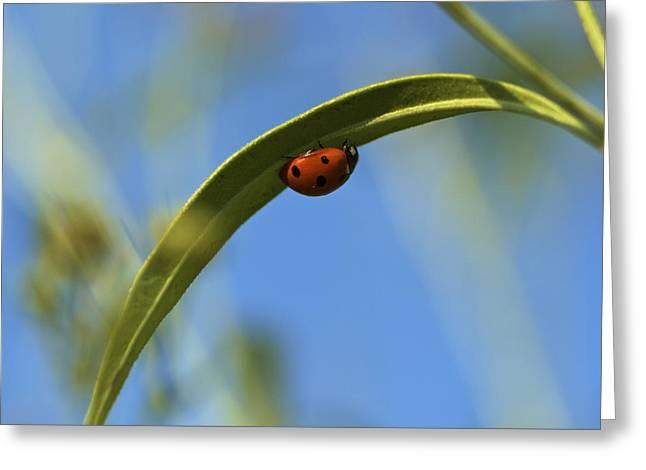 Lady Bug Lady Bug Greeting Card by Jane Eleanor Nicholas
