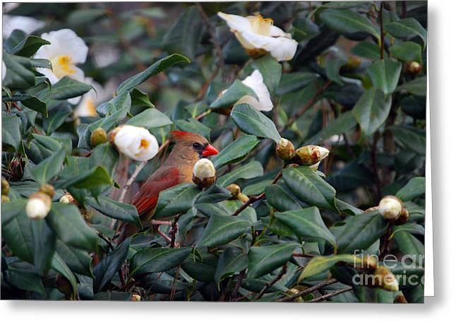 Lady Camellia Greeting Card by Skip Willits