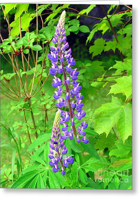 Lady Lupine Greeting Card