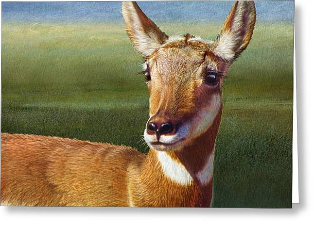 Lady Pronghorn Greeting Card by R christopher Vest