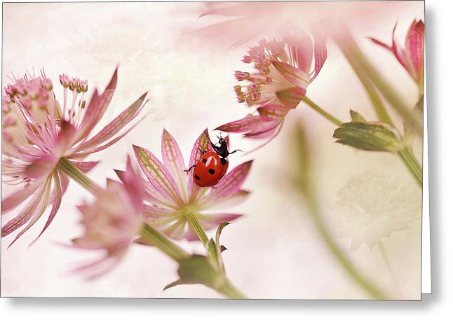 Ladybird And Pink Flowers Greeting Card