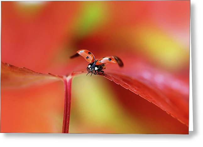 Ladybird In Autumn Greeting Card
