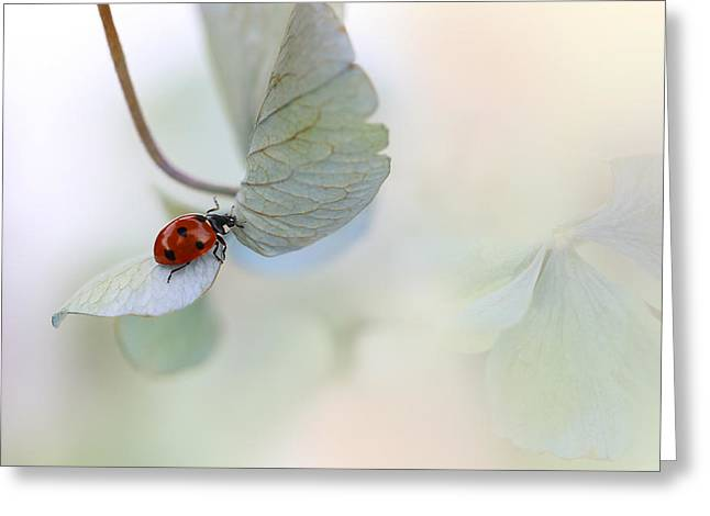 Ladybird On Blue-green Hydrangea Greeting Card