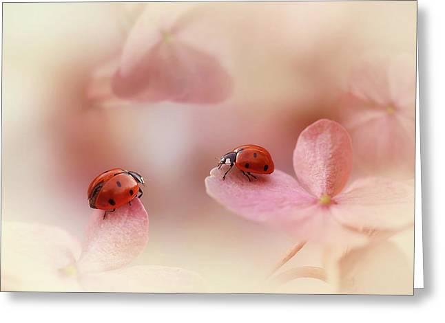 Ladybirds On Pink Hydrangea. Greeting Card