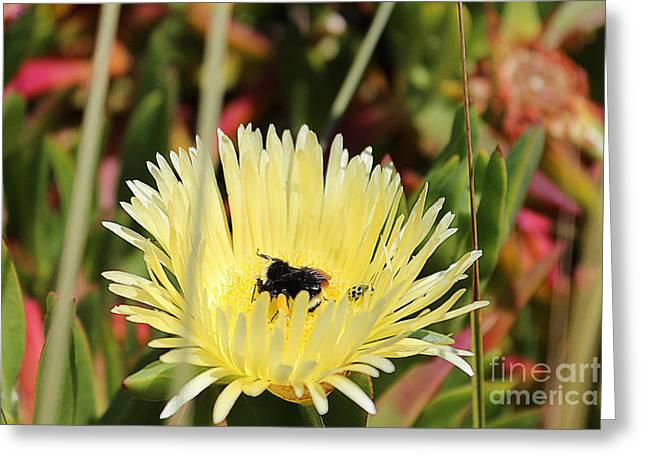 Ladybug And A Bumblebee Greeting Card by Kevin Ashley
