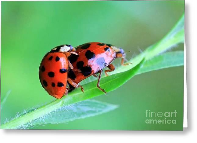 Ladybug And Gentlemanbug Greeting Card