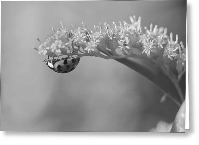 Ladybug And Goldenrod Greeting Card