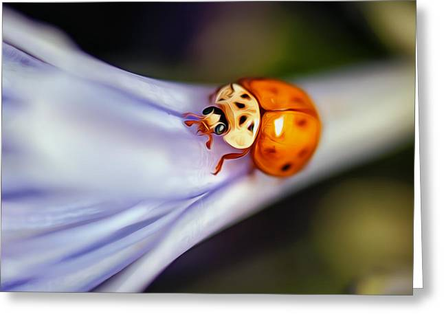 Ladybug Art Greeting Card by Tammy Smith