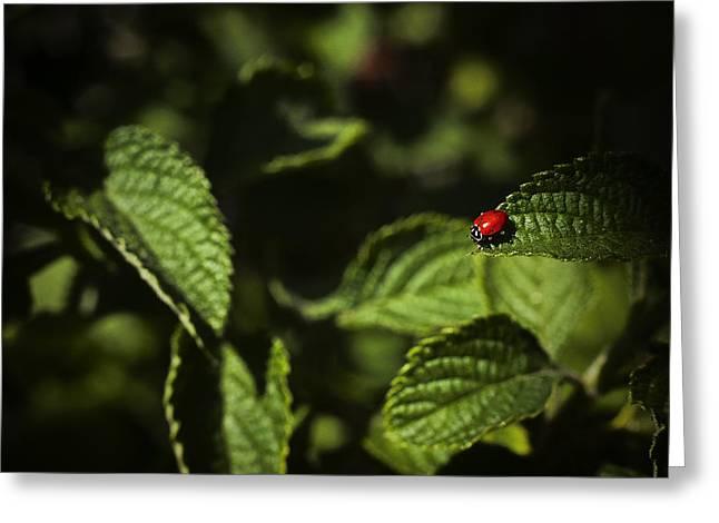 Ladybug Greeting Card by Bradley R Youngberg