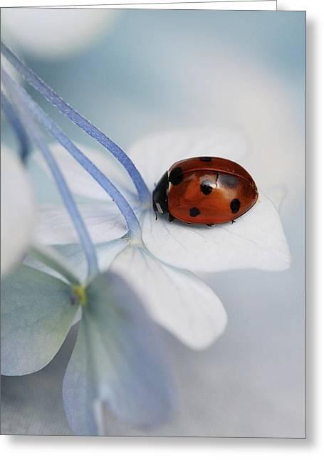 Ladybug Greeting Card by Ellen Van Deelen