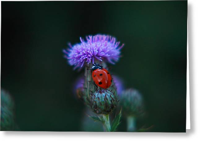 Ladybug Greeting Card by Jeff Swan