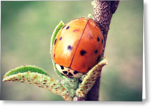 Greeting Card featuring the photograph Ladybug  by Kerri Farley