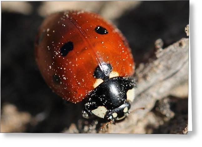 Ladybug Greeting Card by Lorri Crossno