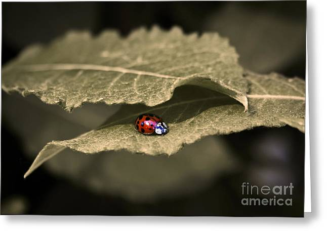 Ladybug Greeting Card by Nora Blansett