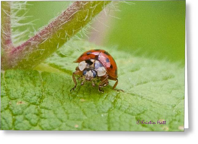Ladybug On Boneset Leaf Greeting Card