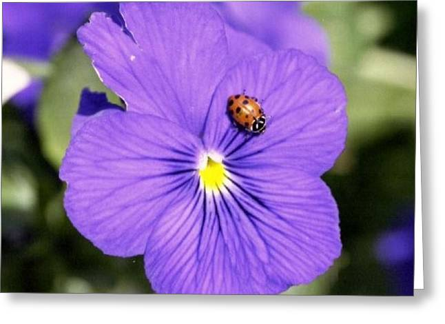Ladybug On Flower Greeting Card