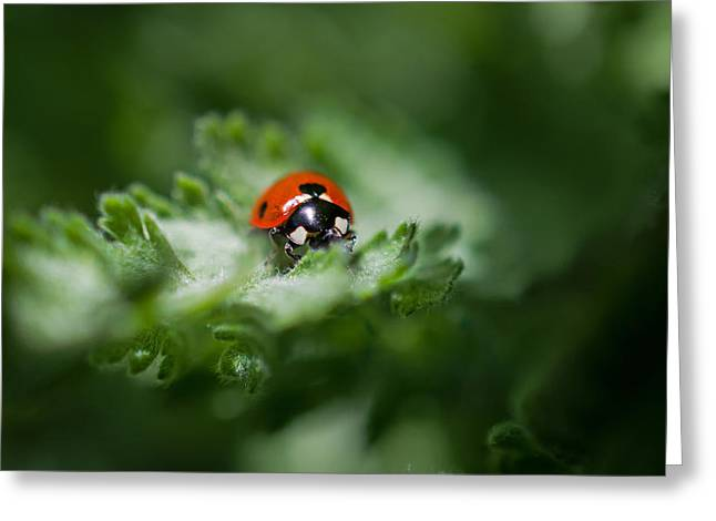 Ladybug On The Move Greeting Card by Jordan Blackstone