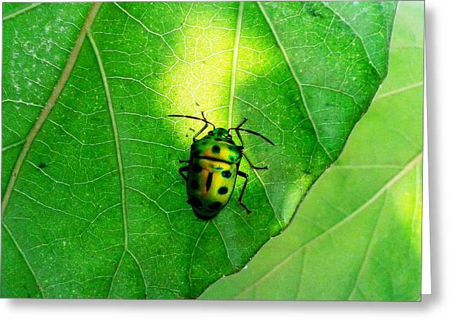 Ladybug Greeting Card by Ramabhadran Thirupattur
