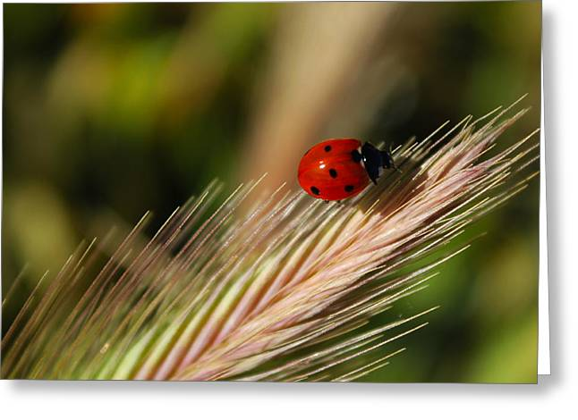 Greeting Card featuring the photograph Ladybug by Richard Stephen